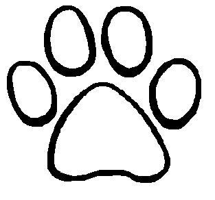 training a bengal cat