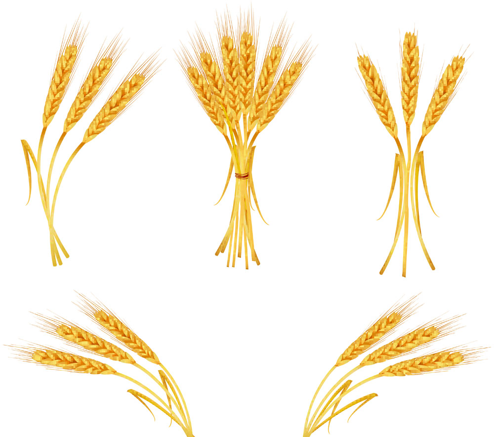 VECTOR WHEAT - ClipArt Best