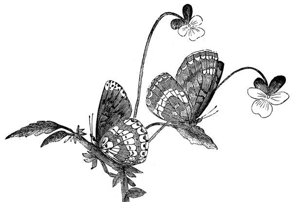 Butterflies Art Images Butterfly Art