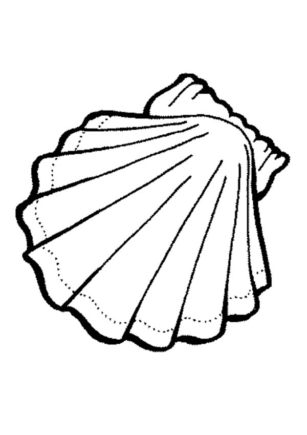 Clam colouring in clipart best for Clam coloring page