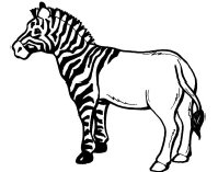 Zebra Template Clipart Best