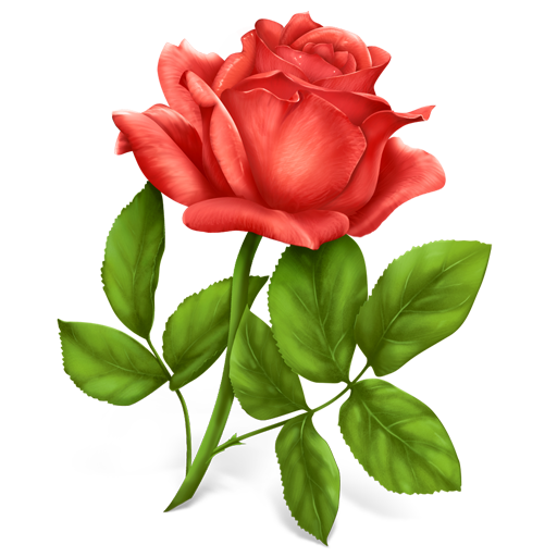 Hd Rose Flower Png