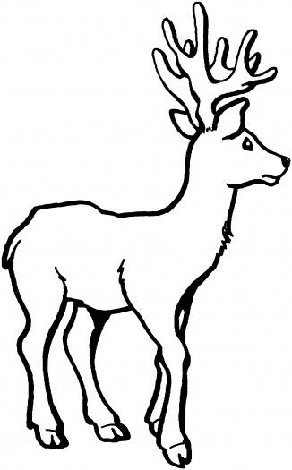 Cartoon Whitetailed Deer