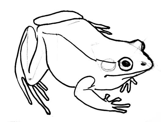 Line Drawing Frog : A drawing of frog clipart best