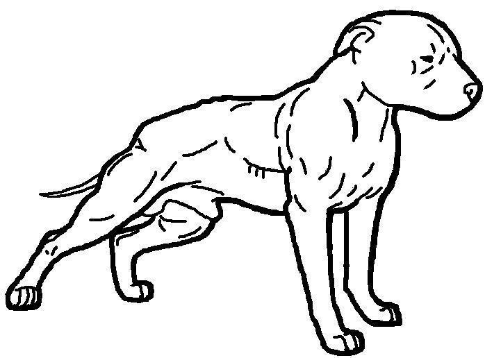 Cartoon Pictures Of Pitbull Dogs - ClipArt Best