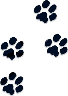 dog paw prints in - photo #31