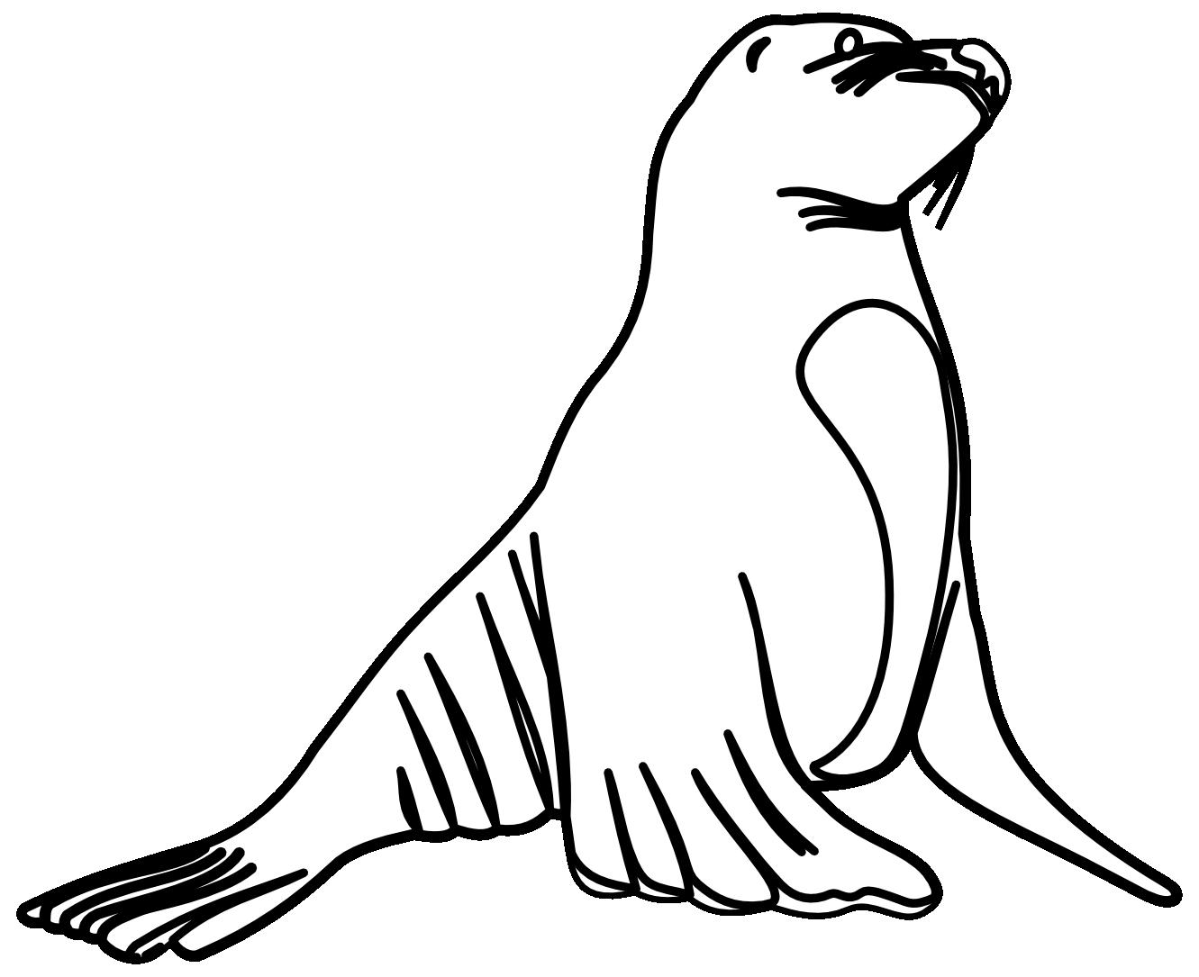 Sea lion clipart black and white