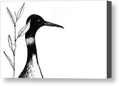 Loon Artist Drawings Canvas Prints and Loon Artist Drawings Canvas ...