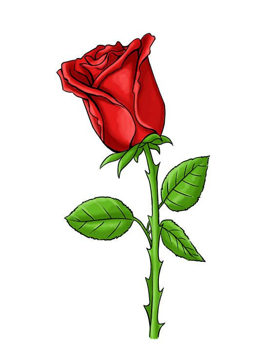how to draw a perfect red rose