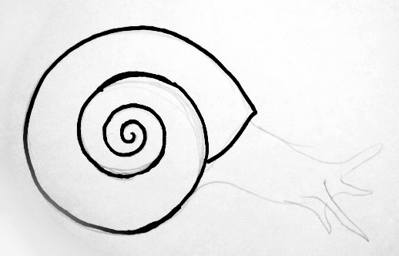Snail shell drawing clipart best for How do you draw a snail