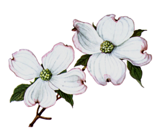 Dogwood Flower Graphic Design Vector Free Download