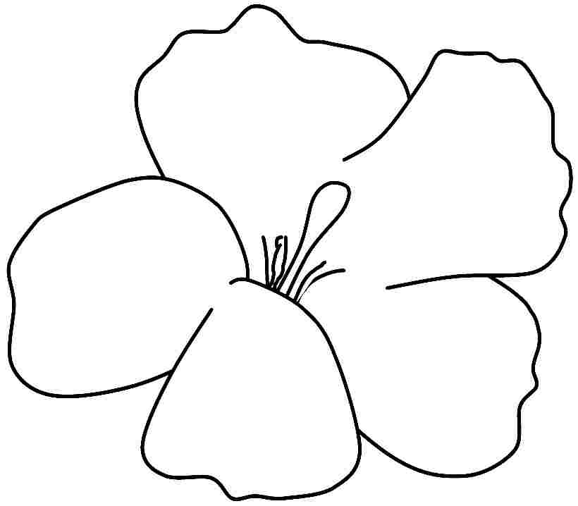 Coloring Pages Of Hibiscus Flowers : Hibiscus coloring printable clipart best