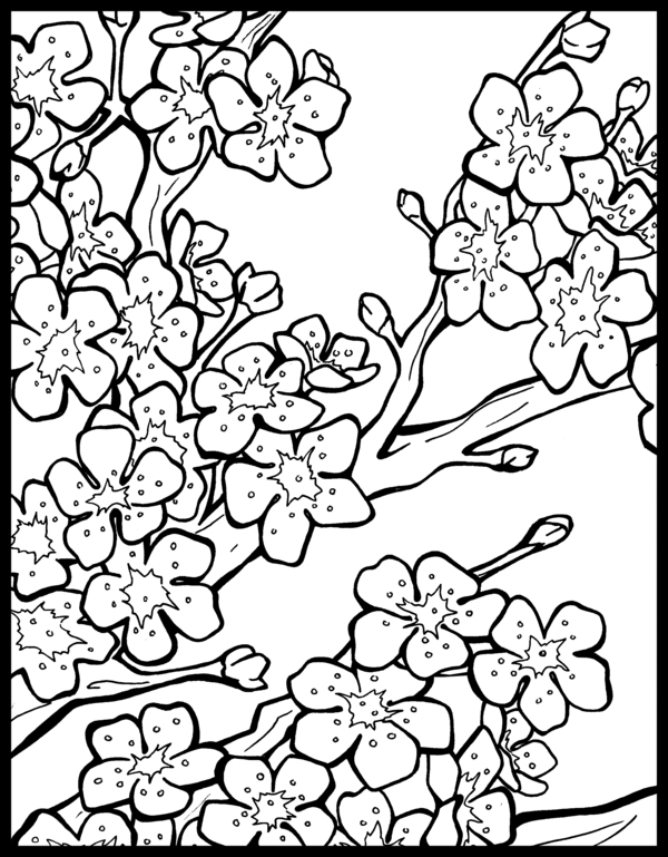 japanese cherry blossom tree coloring coloring pages