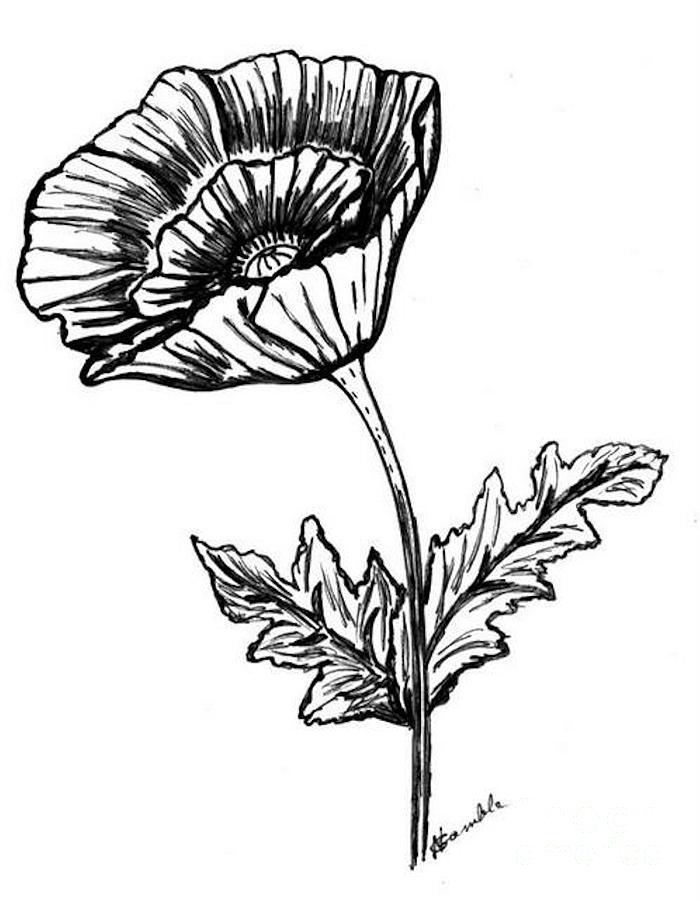 Line Drawing Poppy Flower : Poppy flower line drawing clipart best