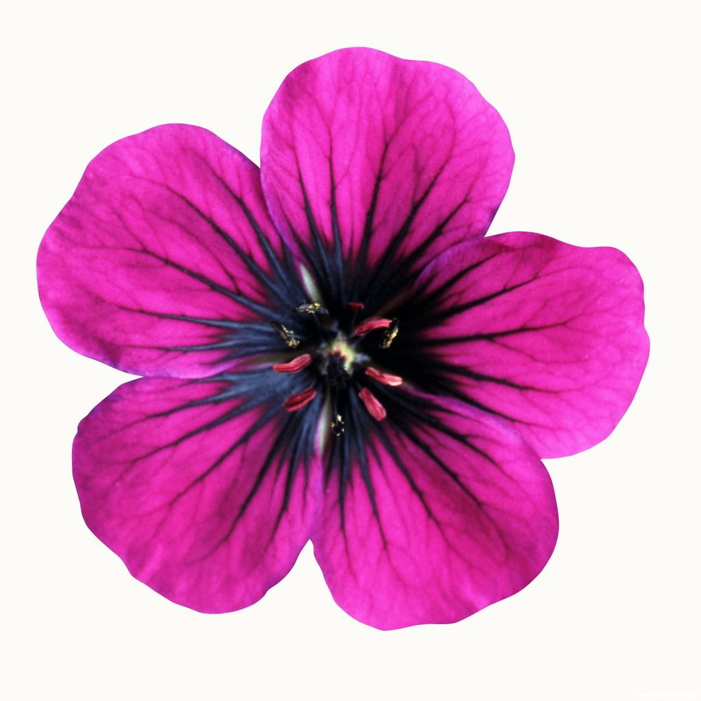 It is a photo of Playful Printable Colored Flowers
