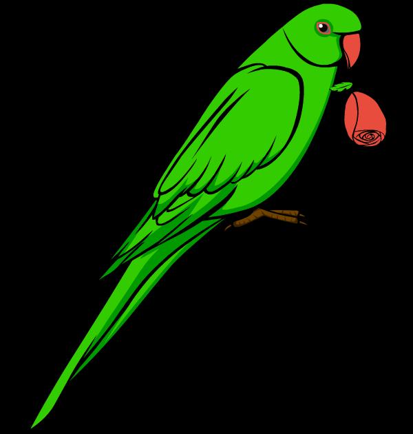 clip art parrots clipart best