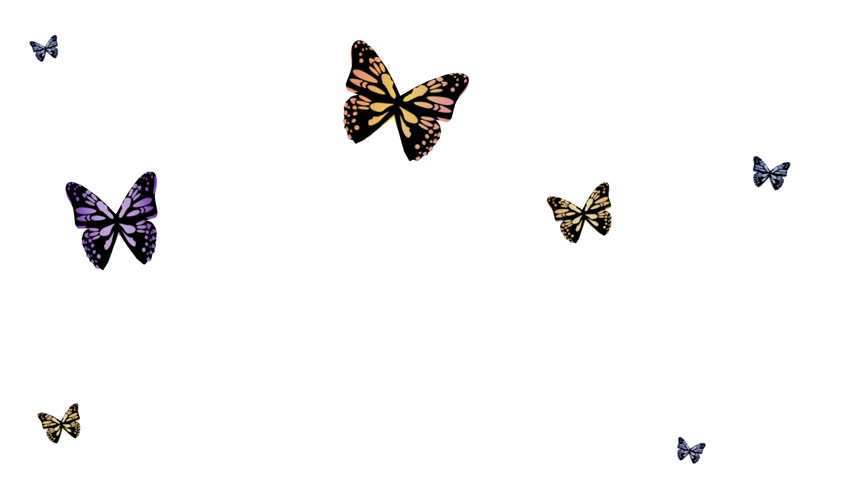 animated butterfly flying clipart best