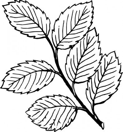 How To Draw A Leaf Clipart - ClipArt Best
