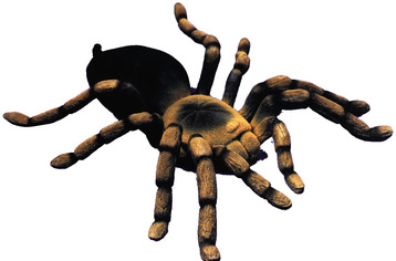 22 animated tarantula free cliparts that you can download to you ...