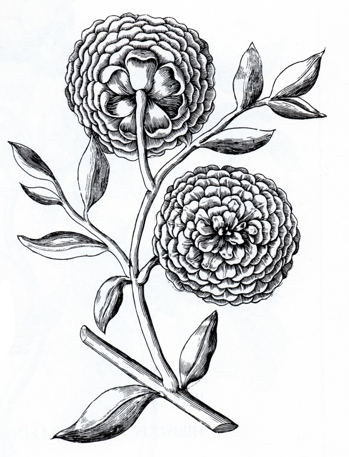 Drawing Of Flowers And A Cross - ClipArt Best