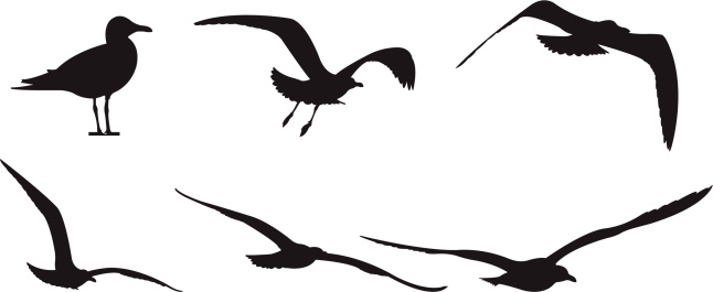 Silhouette Of A Seagull In Flight Clip Art, Vector Images ...