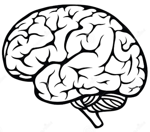 brain vector clipart best