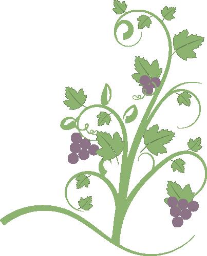 how to grow birdwing vine