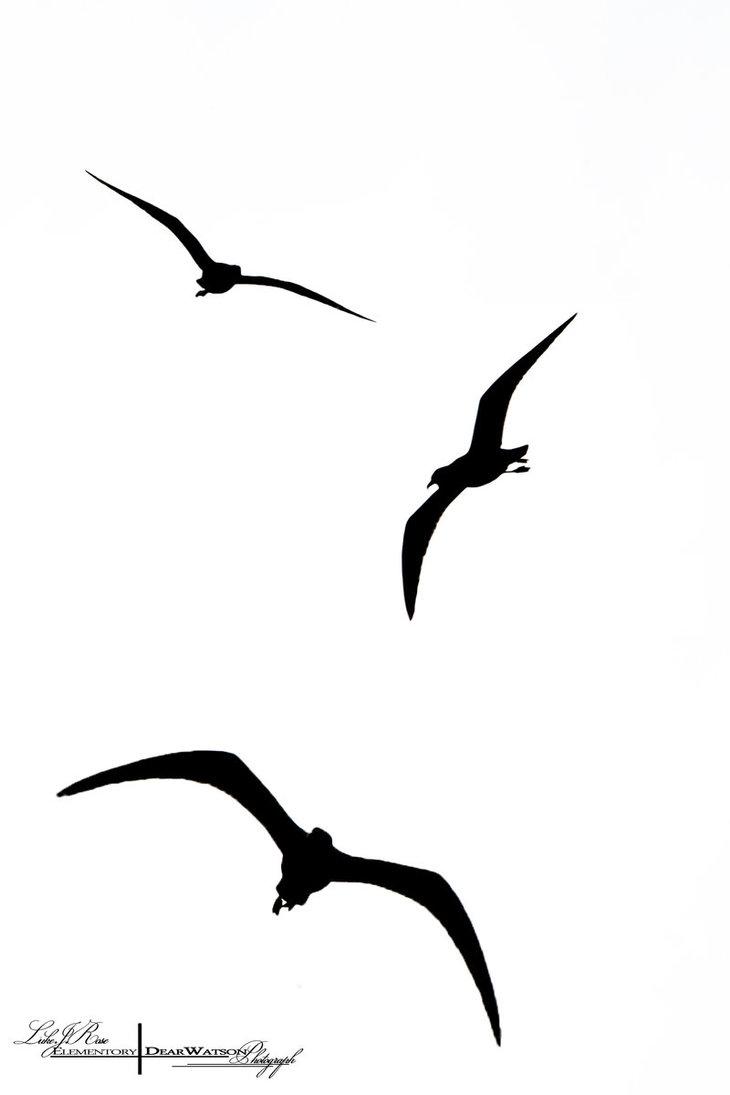 Flying Pheasant Silhouette