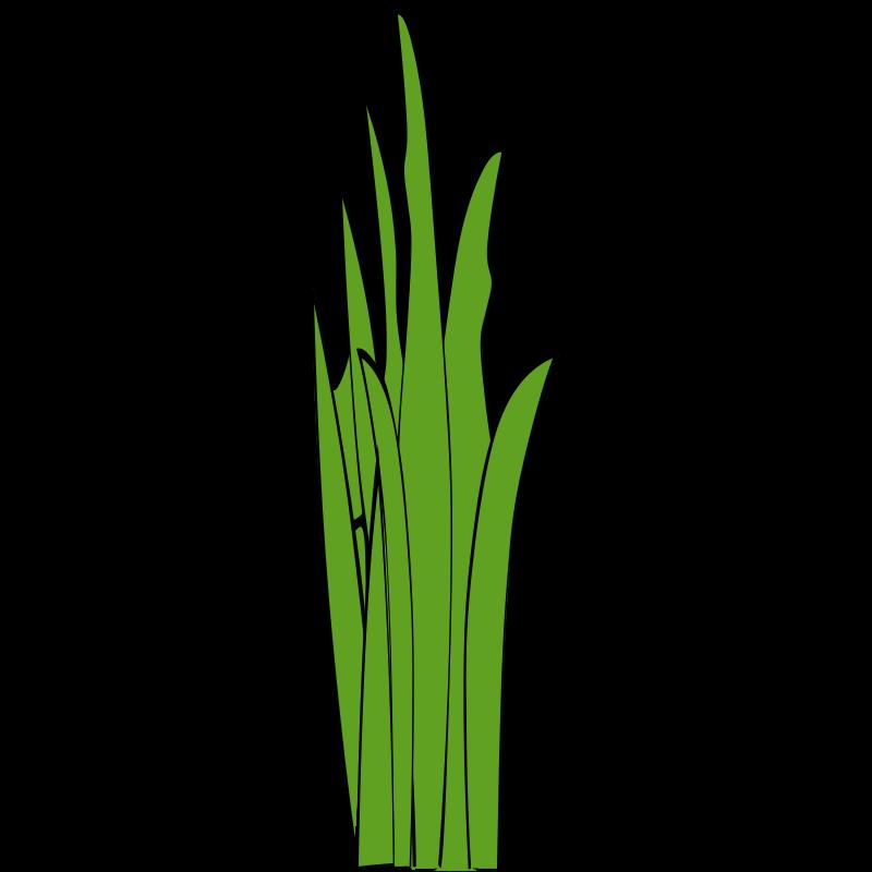 blade of grass vector - photo #8