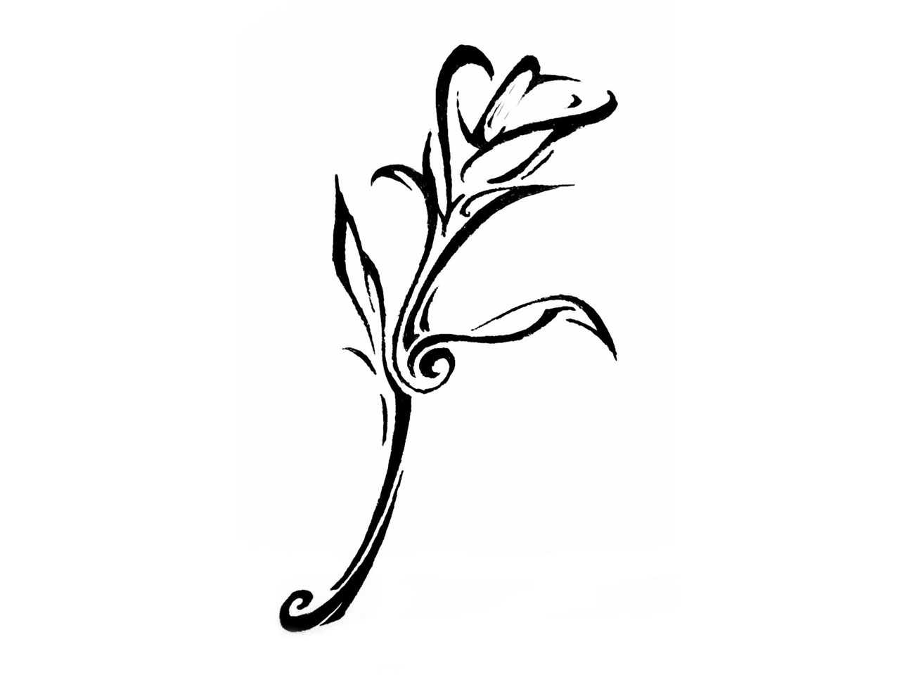 Calla Lily Drawing - ClipArt Best