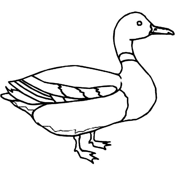 Line Drawing Duck : Duck outline drawing pictures to pin on pinterest daddy