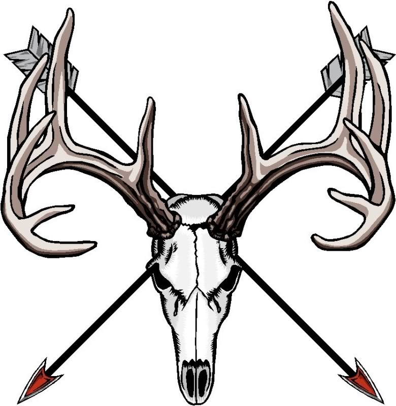 Deer Skull Pics - ClipArt Best Mule Deer European Mount