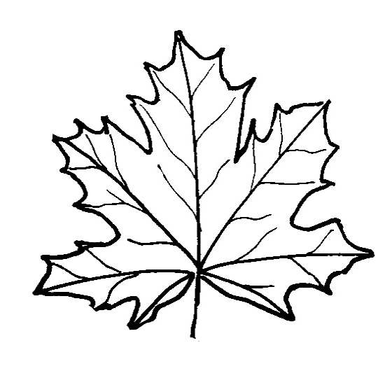 Red Oak Leaf Coloring Pages Coloring