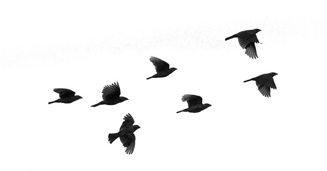 Bird in flight silhouette - photo#6