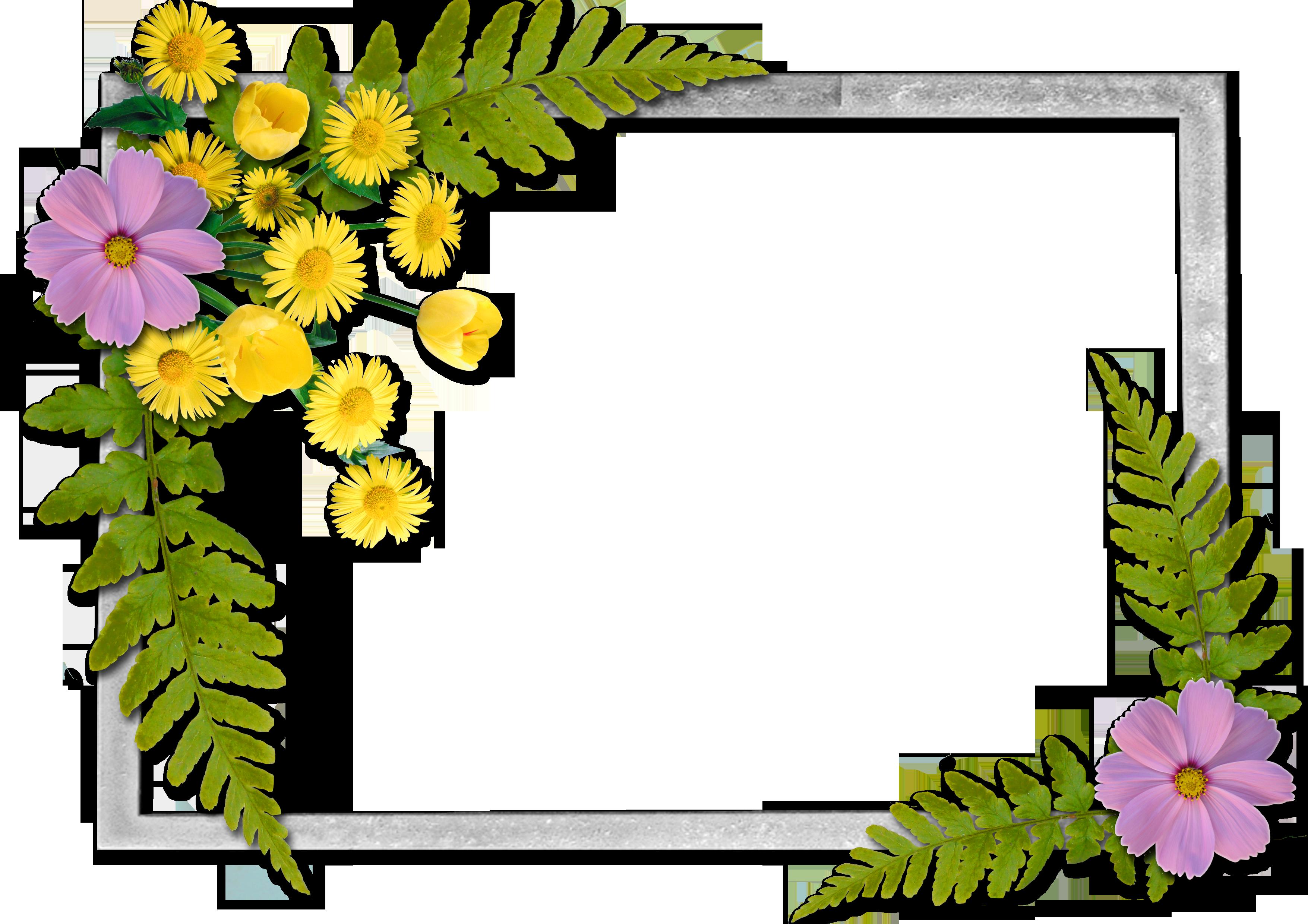 of floral frames - photo #21
