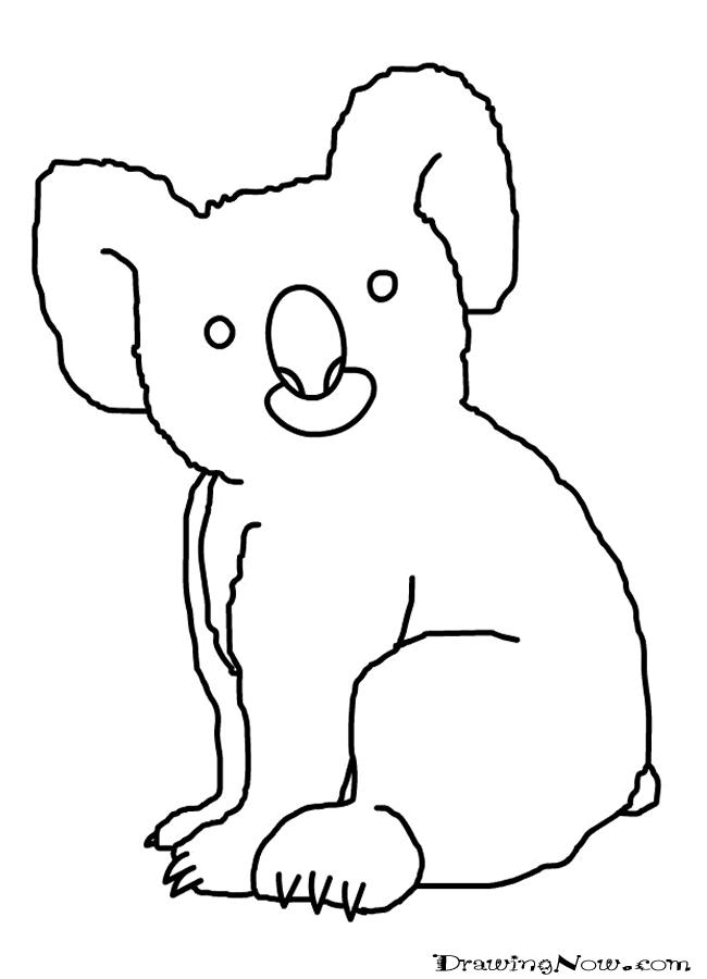 Line Drawings Of Australian Animals : Koala in australia drawing clipart best