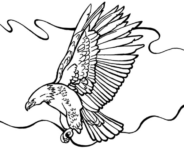 bald eagle coloring sheet clipart best