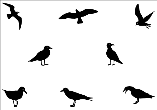 Seagull Silhouette - ClipArt Best