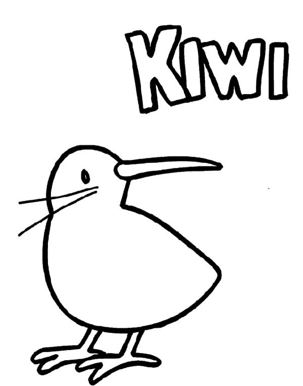 Kiwi bird coloring page clipart best for Kiwi bird coloring page