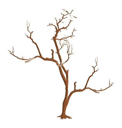how to draw a dead tree branch