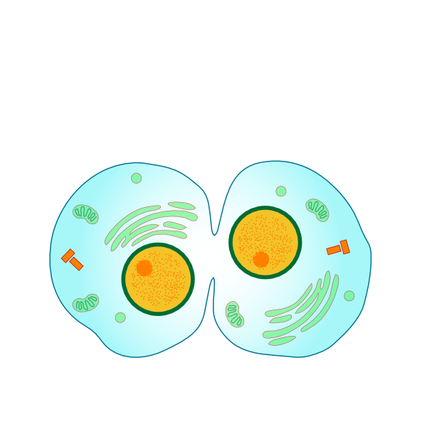 Simple Animal Cell Diagram For Kids - ClipArt Best