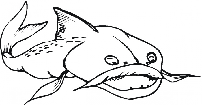 free coloring pages of catfish - photo#30
