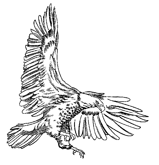 Bald Eagle Clipart Black And White - ClipArt Best