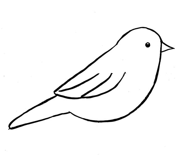 chickadee bird coloring pages - photo#22