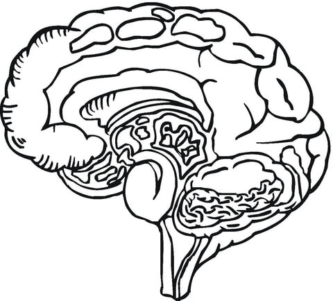 Enterprising image with brain printable