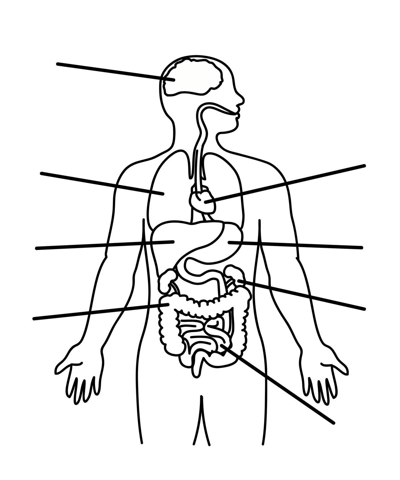 Blank Human Body Chart & Blank Body Free Download Clip Art Free ...