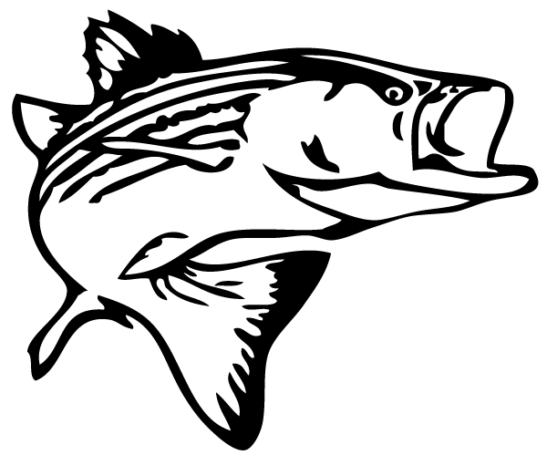 drawings of bass fish clipart best