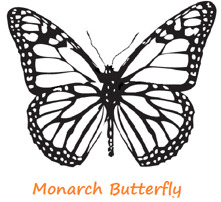 Butterfly Art Sketches
