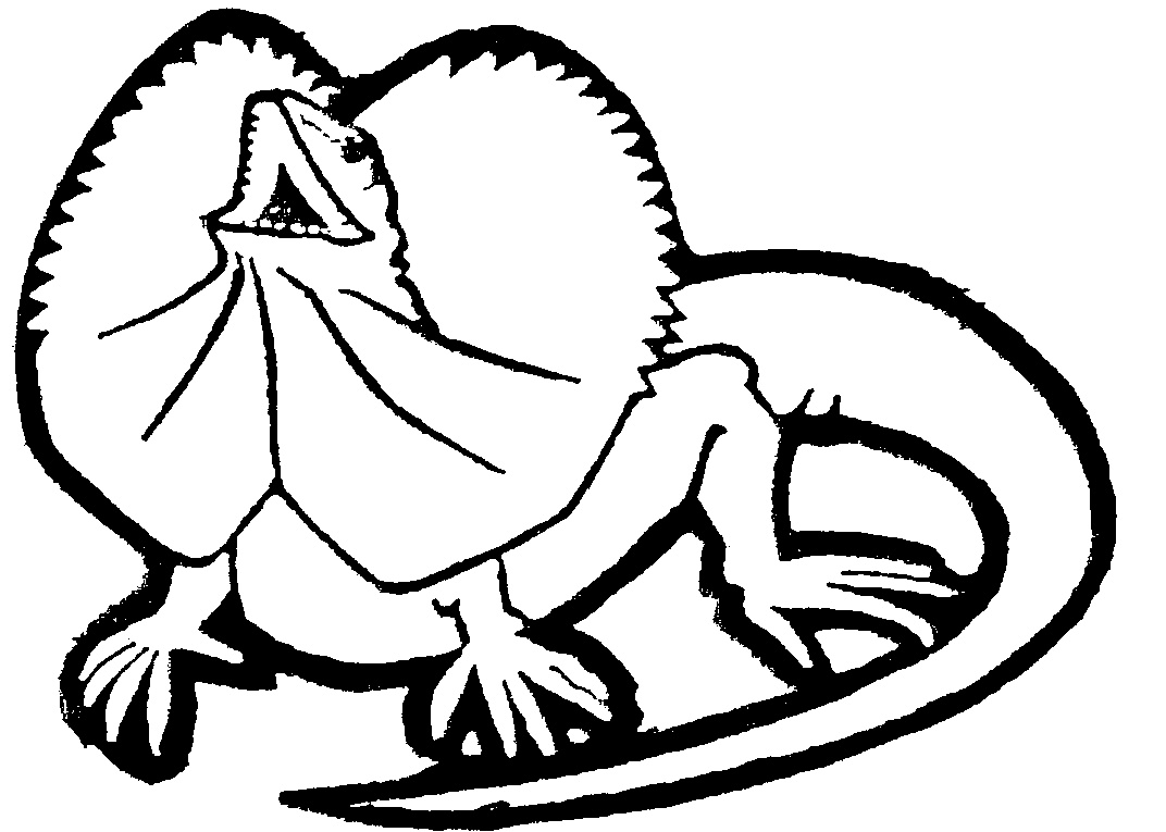 Drawings of lizards clipart best for Lizard coloring pages