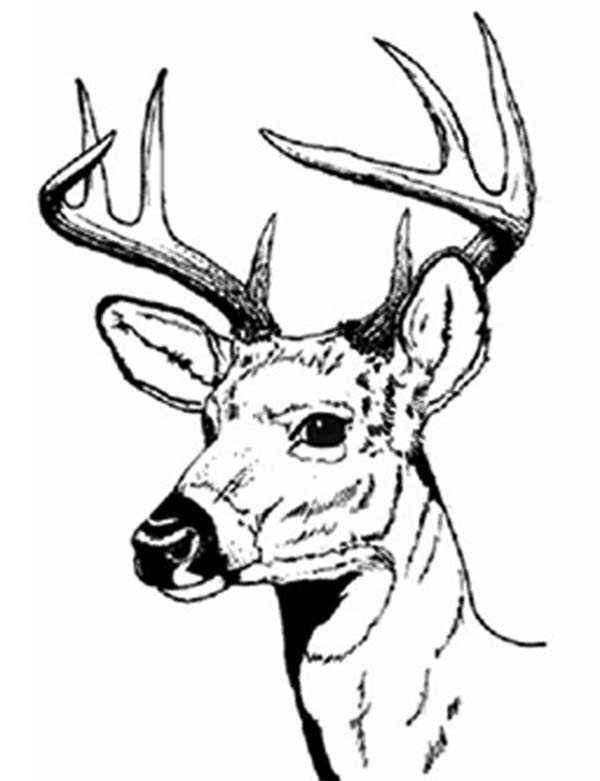 deer head coloring book pages | Deer Head - Free Coloring Pages